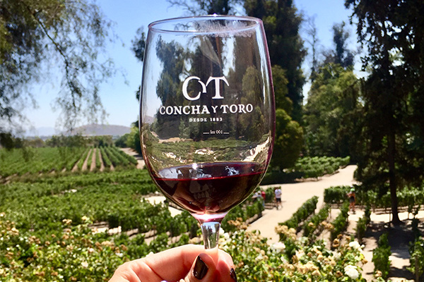 City Tour & Concha y Toro